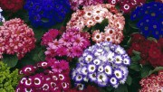 Flowers and Gardens HQ wallpapers Collection 1 D9f351108224620