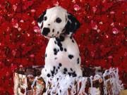 Cuteeeeee Animals wallpapers C3e17a108284823