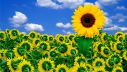 Flowers and Gardens HQ wallpapers Collection 2 B6f0ea108363626