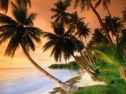 Beautiful Beaches Of The World HQ Wallpapers Cf8a7d108499960