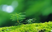 Green Plants Birth HD Wallpapers Cb64bf108974592