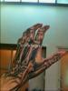 [sondage] Que pensez vous du tatoo à la main de Bill ? B6306e173740702